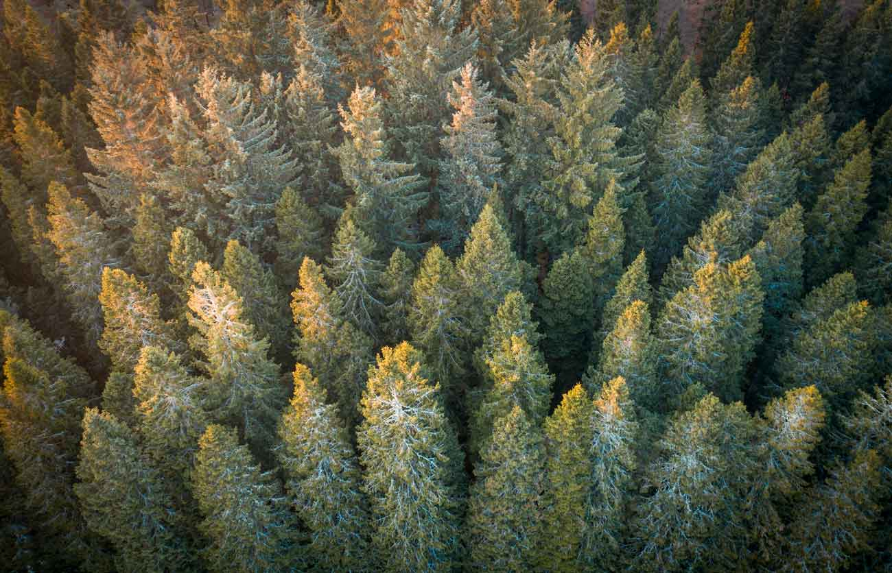forest photographed by drone for mapping and surveying